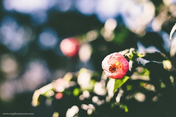 pink-flower-in-morning-light
