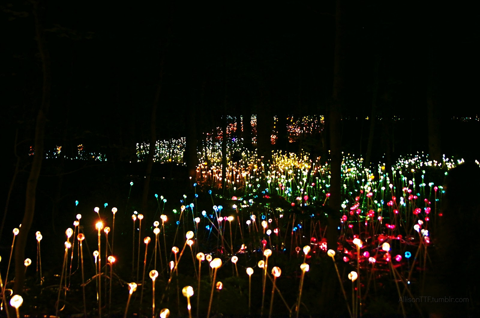 longwood garden 39 s light show by bruce munro totus tuus family catholic homeschool