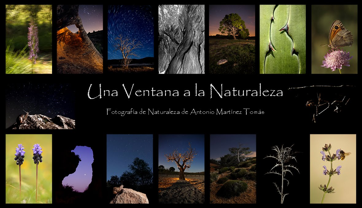 Una ventana a la naturaleza