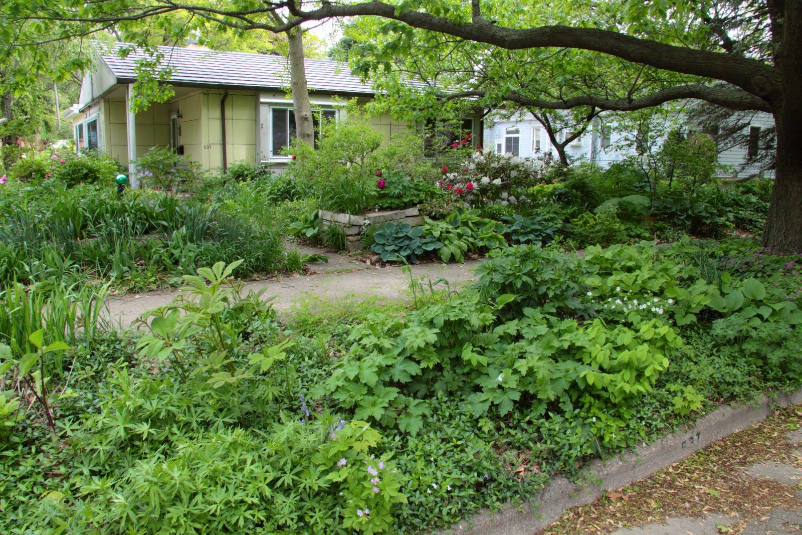 Rain Gardens in Dane County: build a large rain garden on ...