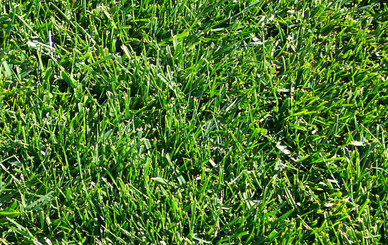 types of grasses There are different variations of types of florida landscape grass and lawns  what type that can be installed depends upon the types of florida grass that are.