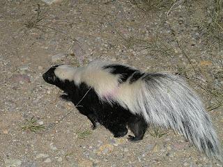 ملف كامل عن اجمل واروع الصور للحيوانات  المفترسة   حيوانات الغابة  555844696_acf9a0c085
