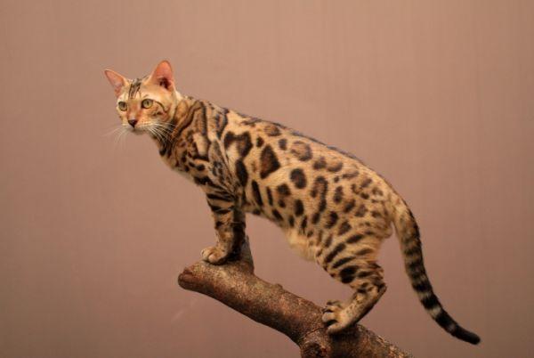 12 Spesies Binatang Baru Hasil Kawin Silang Dari Jenis