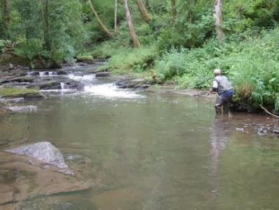 El robalo la pesca de la trucha con vinilos for Estanque de truchas