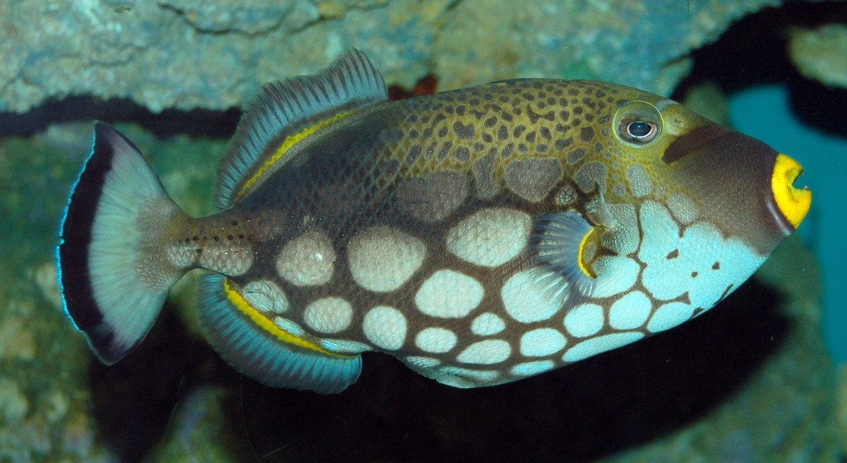 Top 10 Most Colorful and Beautiful Fish | Mathias Sauer