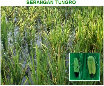 Serangan Tungro