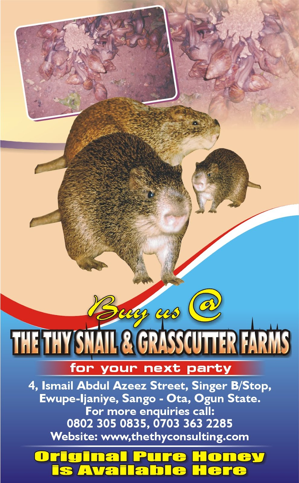 Snails Farm Snail Farming in Nigeria
