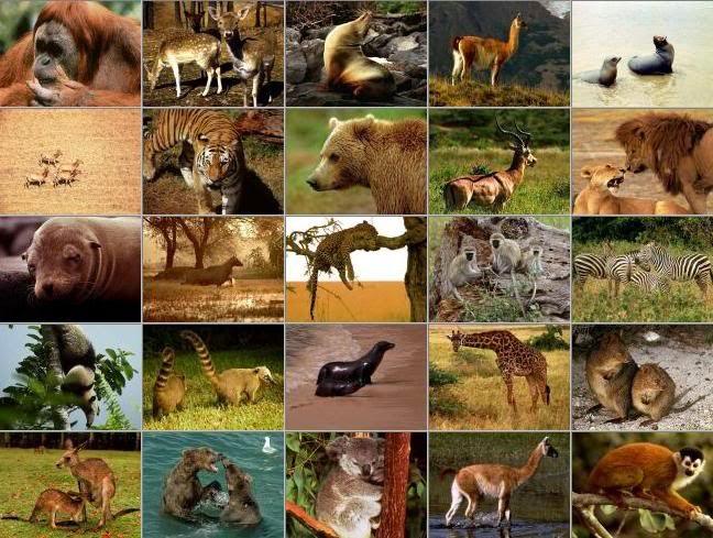 18++ Deskripsi hewan buas dalam bahasa inggris terbaru