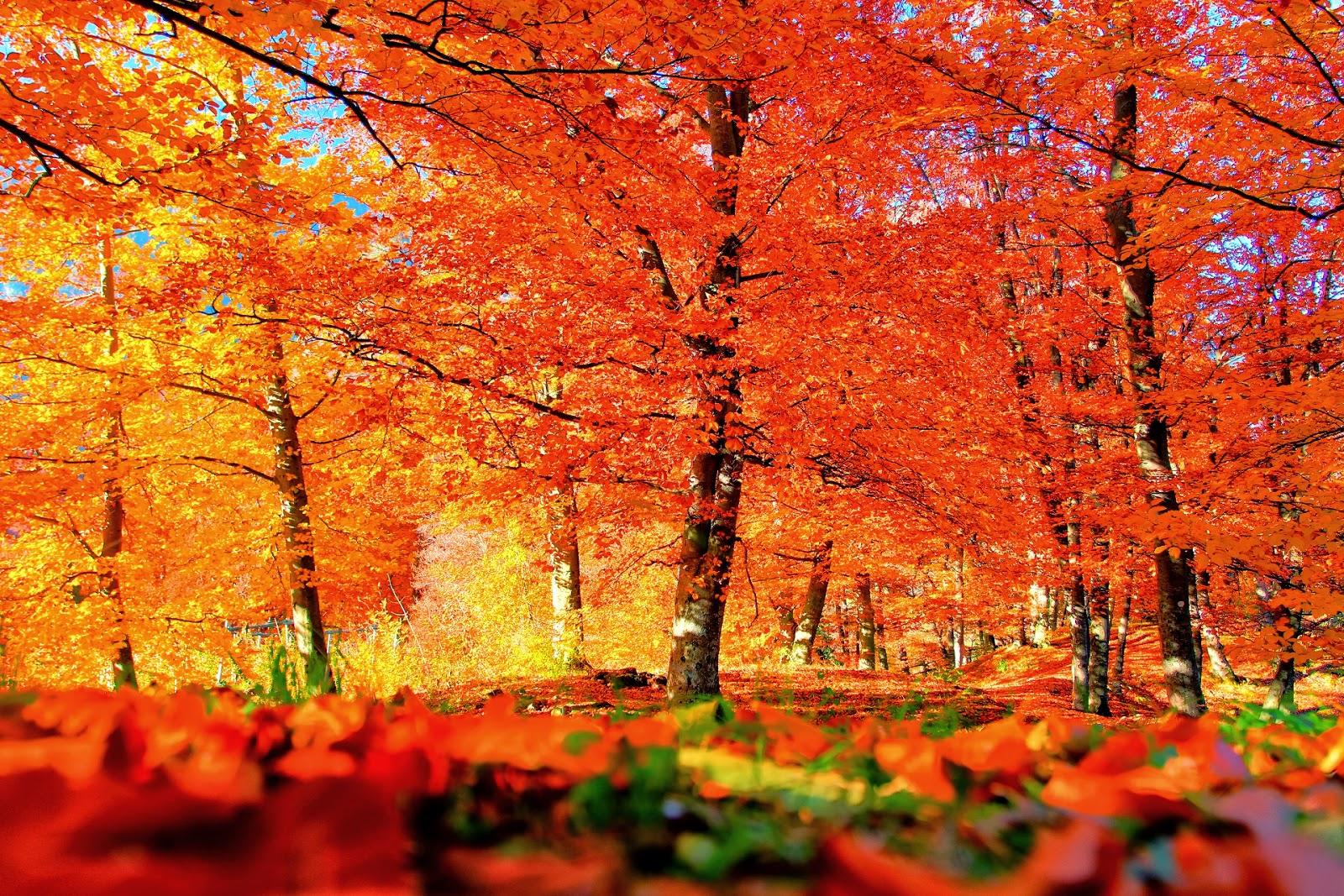 Autum Backgrounds: VintageVelvets...: Happy Autumn 2013