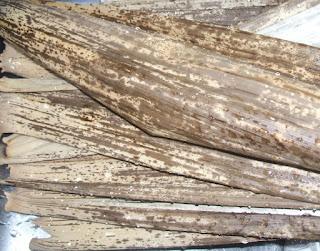 竹皮ぞうりの作り方、準備