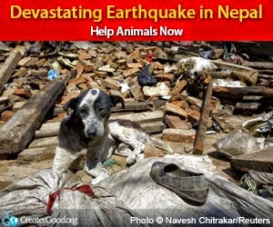 Devastating Earthquake In Nepal