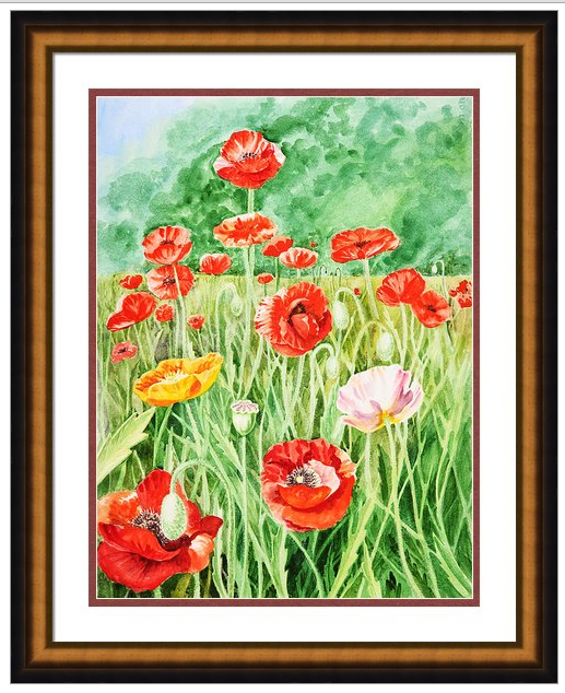 red yellow pink poppy