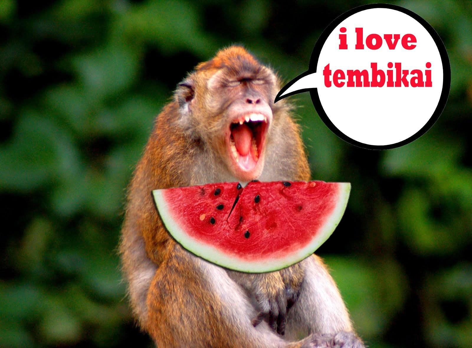 watermelon is good