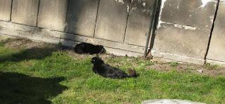 pisici2.JPG