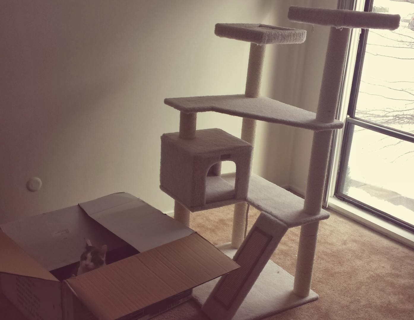Funny cats - part 90 (40 pics + 10 gifs), cat choose playing in box than in expensive cat tree