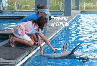 tickling a dolphin
