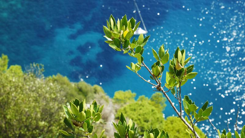 Il mare e la vegetazione di Capri