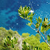 Itinerari fotografici: Capri