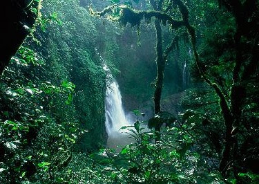 Parque nacional yasuni lugares tur sticos de ecuador amazonia norte - Mas goy fornells de la selva ...