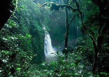 Parque Nacional Yasuni