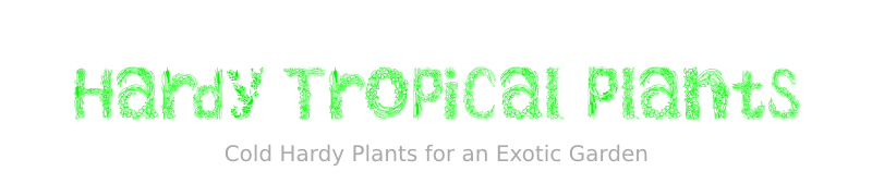 Hardy Tropical Plants