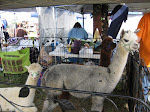 Alpaca Friends Fall Festival 2011
