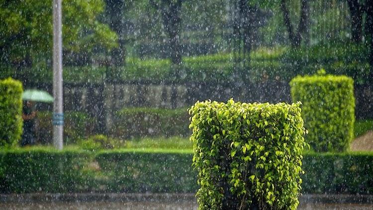 Rain in Public Park