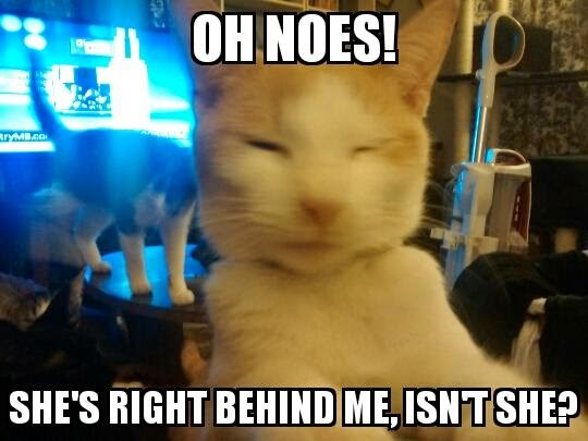 Celina's Cat Meme of the Week