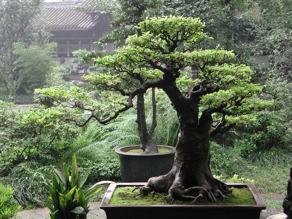 Fourth Eye Bonsai