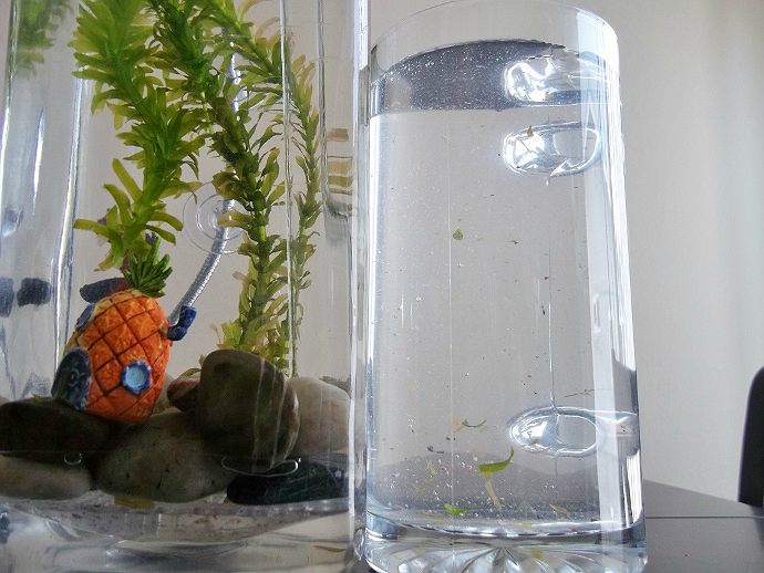 Momma told me nocleanaquarium betta fish tank review for How to clean a fish tank