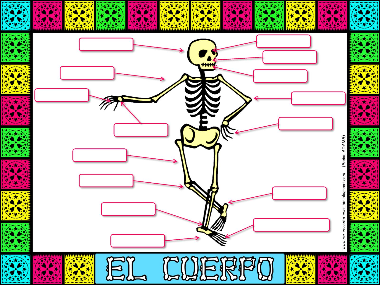 Me encanta escribir en español: Las partes del cuerpo (con una calavera)