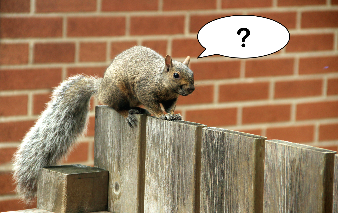What does the squirrel say?
