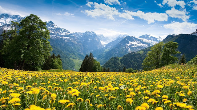 Dandelions In The Mountains HD Wallpaper