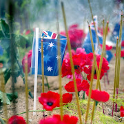 Anzac Day 2013 (poppies)
