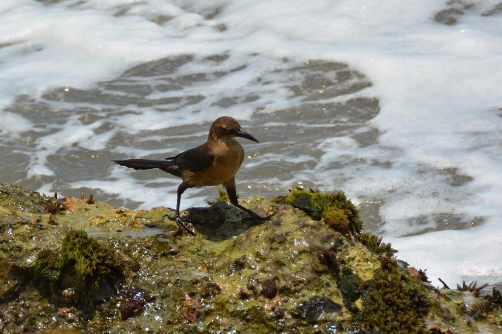 Bocagrande Beach Cartagena birds