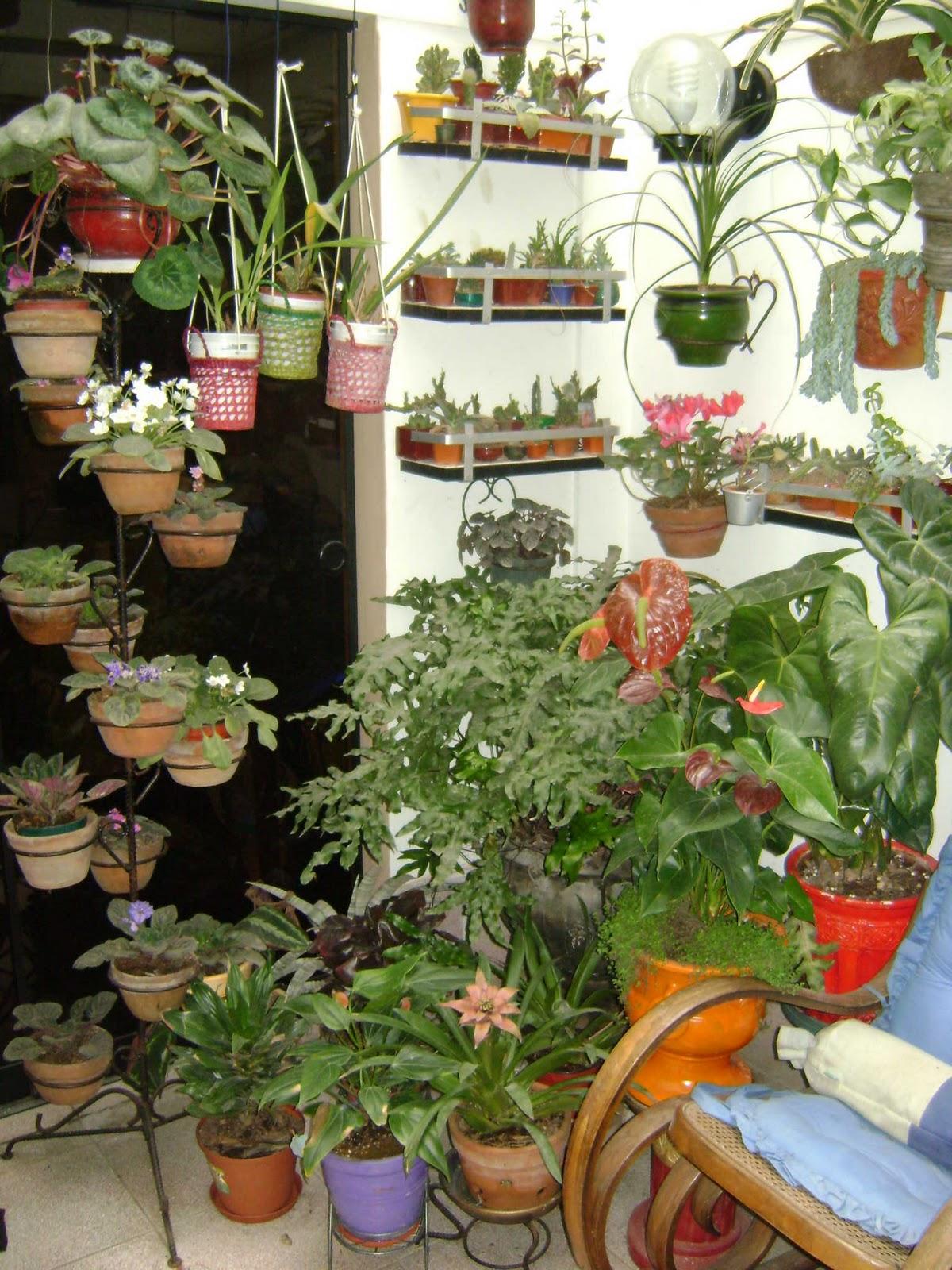 Jardines y macetas utilizacion de espacios peque os for Jardines pequenos orientales