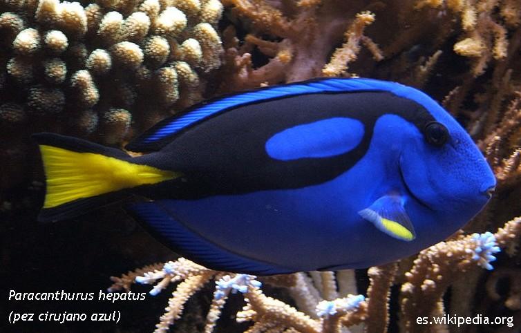 El blog de la lincesa te gustan los peces de colores - Peces para tener en casa ...