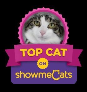 ShowmeCats