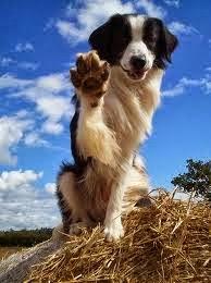 como adiestrar un perro