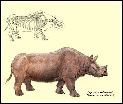 rinocerontes extintos Peraceras