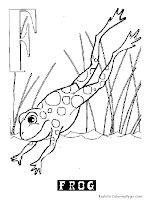 Animal Alphabet F Frog