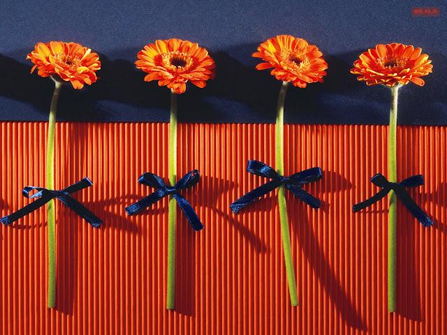 Hình ảnh hoa đẹp 17