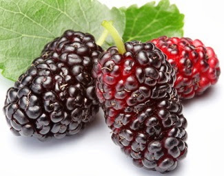 Buah Mulberry (Google)