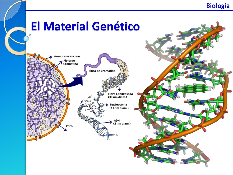 estructura material: