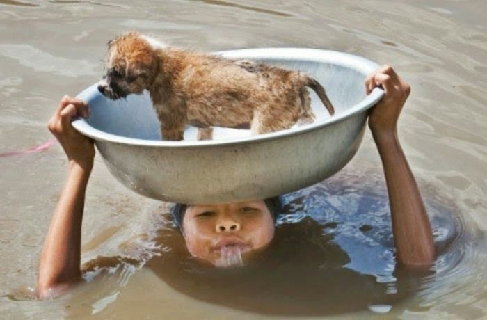 People doing amazing things for animals (28 pics), a child saved a puppy from flood