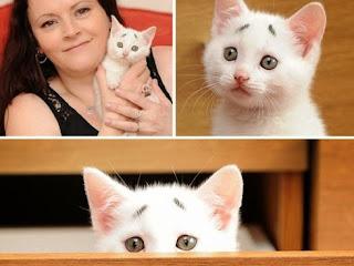 http://asalasah.blogspot.com/2015/05/anak-kucing-ini-lahir-dengan-wajah.html