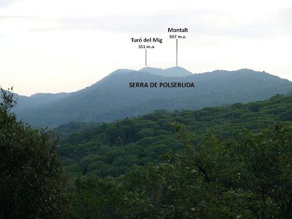 La Serra Polseruda i el Montalt sobre el verd intens de les pinedes, des de la zona del Turó d'en Rimbles