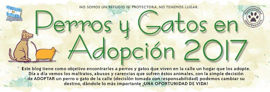 Perros y Gatos en adopción 2017