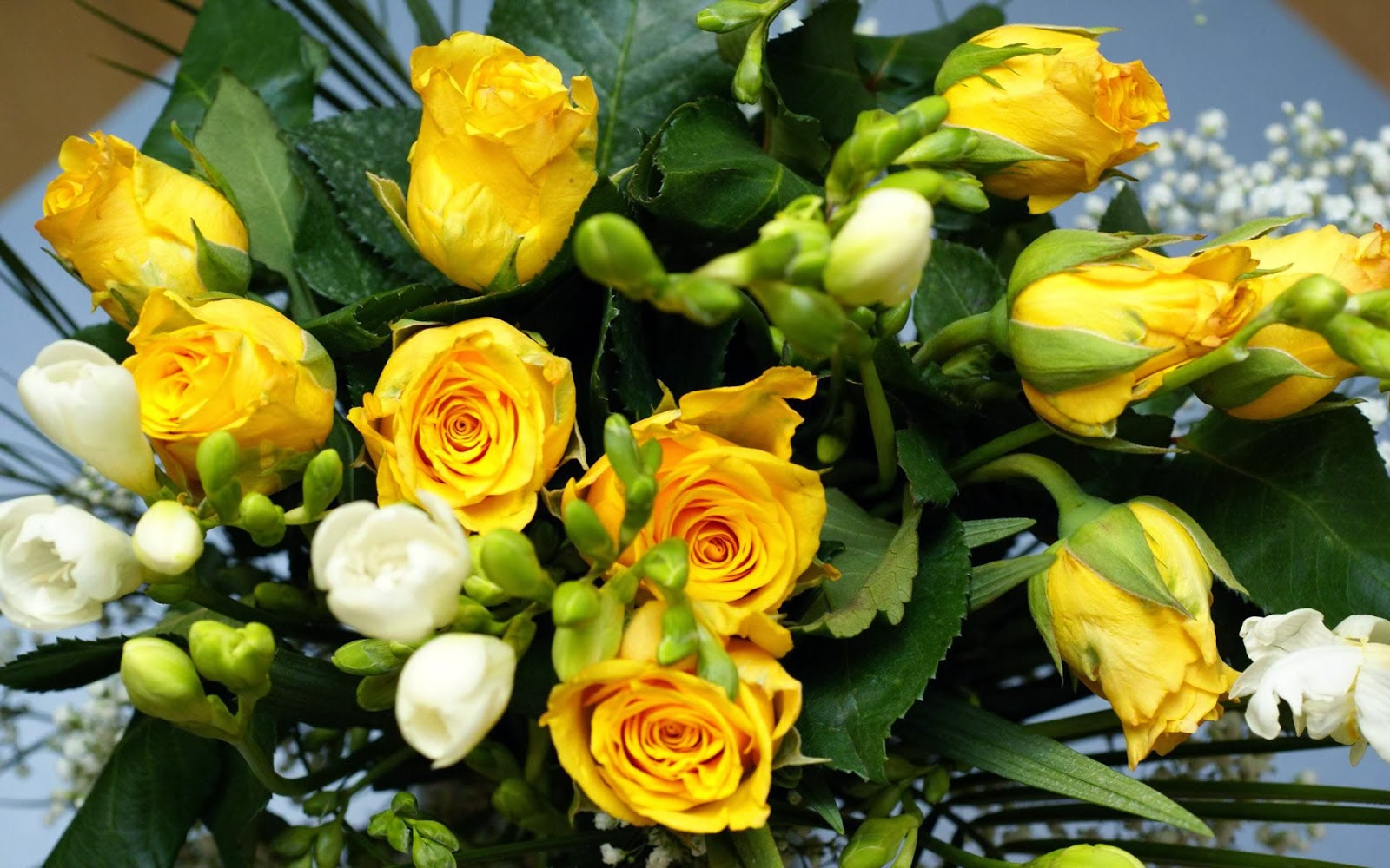 Yellow Roses Wallpapers Keywords Here
