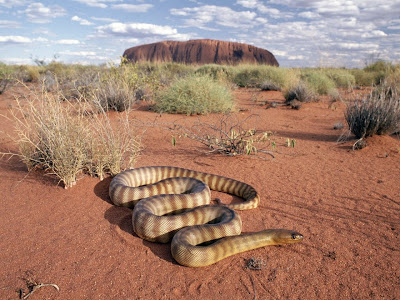 Desert Snake Picture